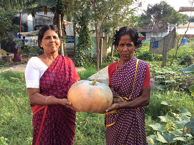 So proud to harvest the first pumpkin from our garden.